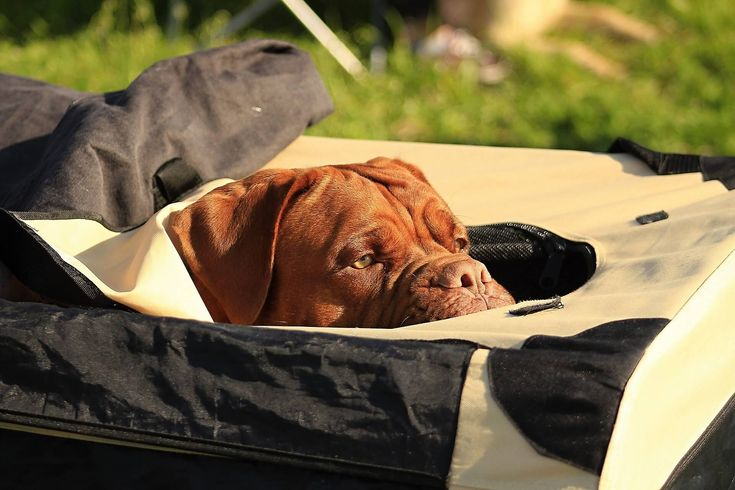 A crate is one of the safest places for your pet dog. We have listed here the top best soft dog crates to help you getting the best one.  http://petcareup.com/best-soft-dog-crates/