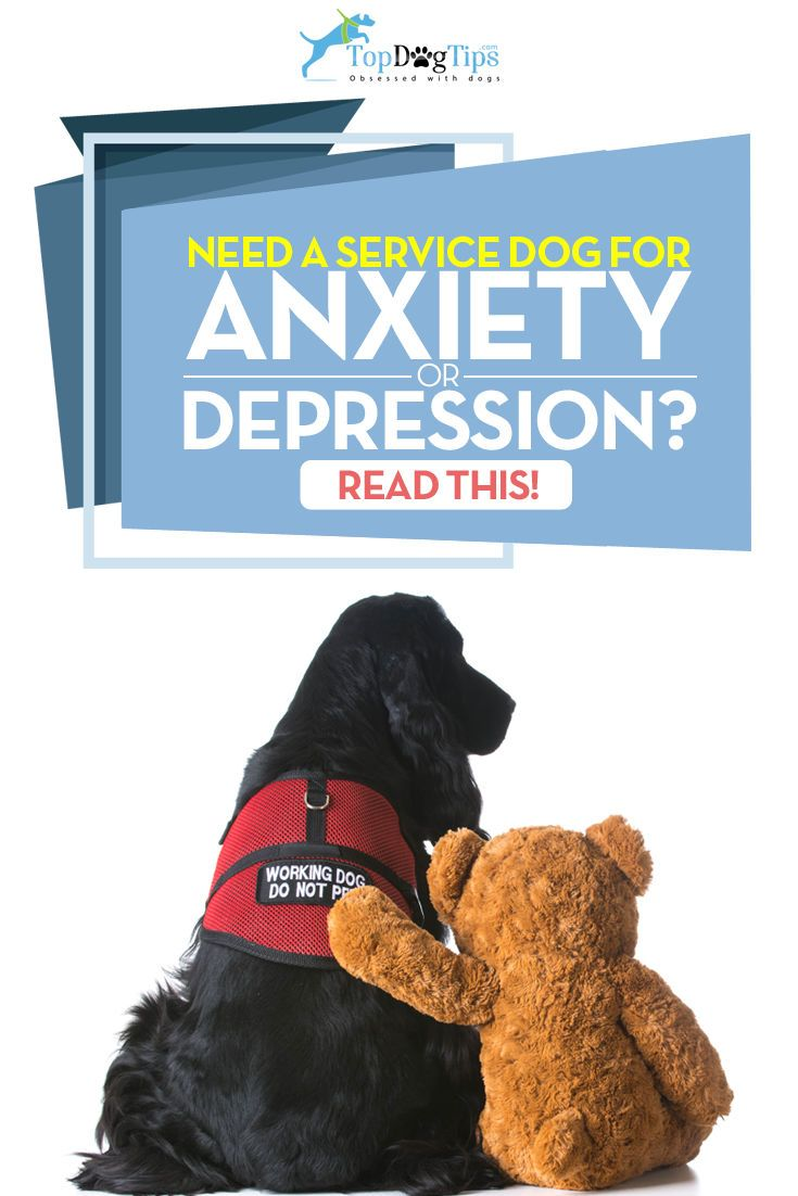 How to Get a Service Dog for Anxiety or Depression Guide