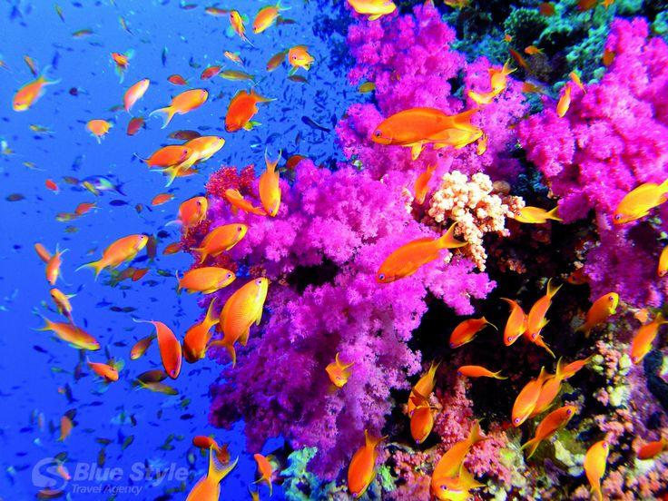Korálové útesy, Sharm El Sheikh