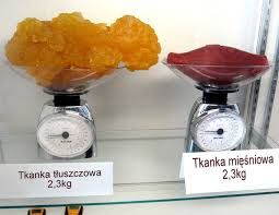 http://dzienniczek-cellreset.pl.tl