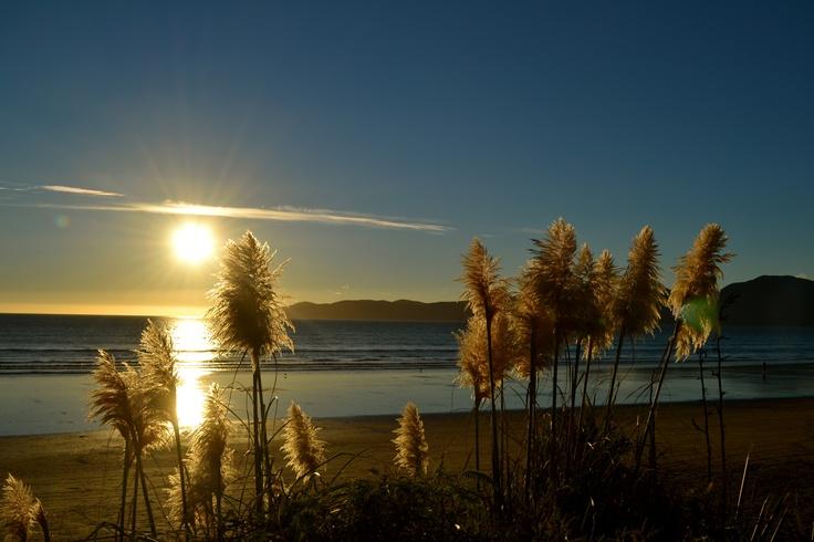 A touch of paradise - Raumati Beach, Kapiti Coast, New Zealand