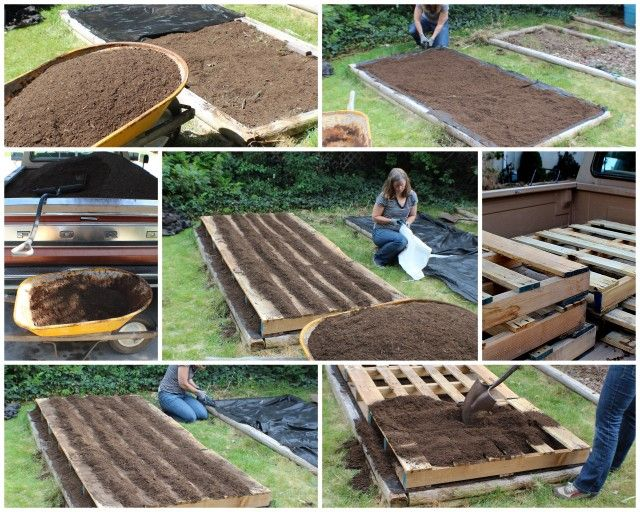 Urban gardening pallets fruit trees sprouting for Gardening using pallets