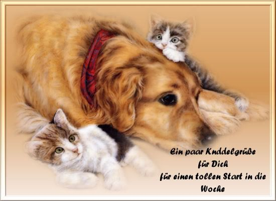 Picture Of Peace Signs Cats And Dogs