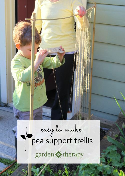 A super simple trellis for training peas - fun family gardening project