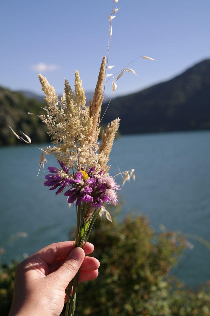 Kır çiçekleri Izmit Turkey