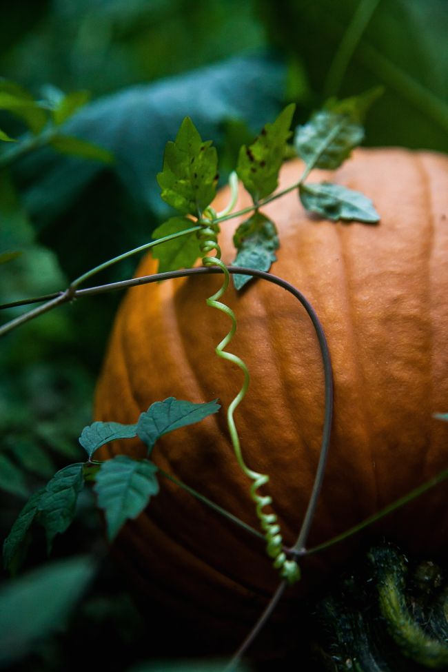 Rock over to Darts Farm for your Halloween pumpkins