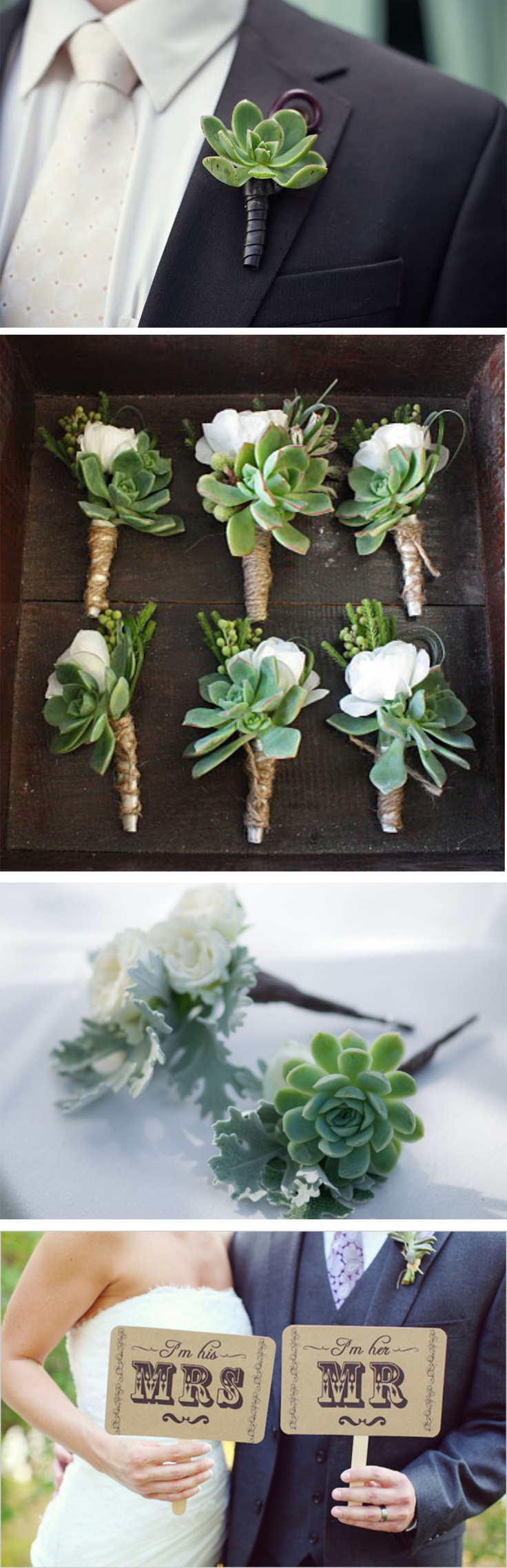 I'm obsessed with succulents... These are gorgeous.