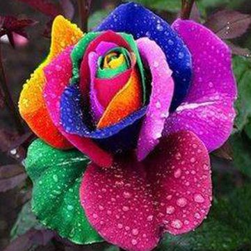 100Pcs Rainbow Rose Seed Colorful Rose Flower Home Garden Bonsai  Potted Ornamental Plants  - Newchic Mobile.