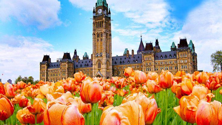 Canada tulip festival Ottawa, Canada