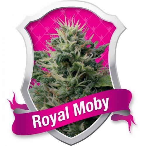 La Royal Moby est issue d'une souche Sativa très puissante. Elle produit un effet physique et mental, la descente est longue et... spéciale. Il ne faut pas oublier la nourriture et la boisson ! Une souche idéale pour traiter la nausée et les troubles de l'alimentation.