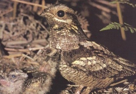 Wildlife walks including nightjar walks, bat detecting and butterfly walks.