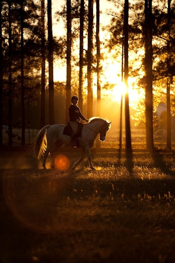 """""""Eventing"""" by Steven C. Bloom My favorite time to ride is as sun rises to warm up before show day starts or as the sunsets."""