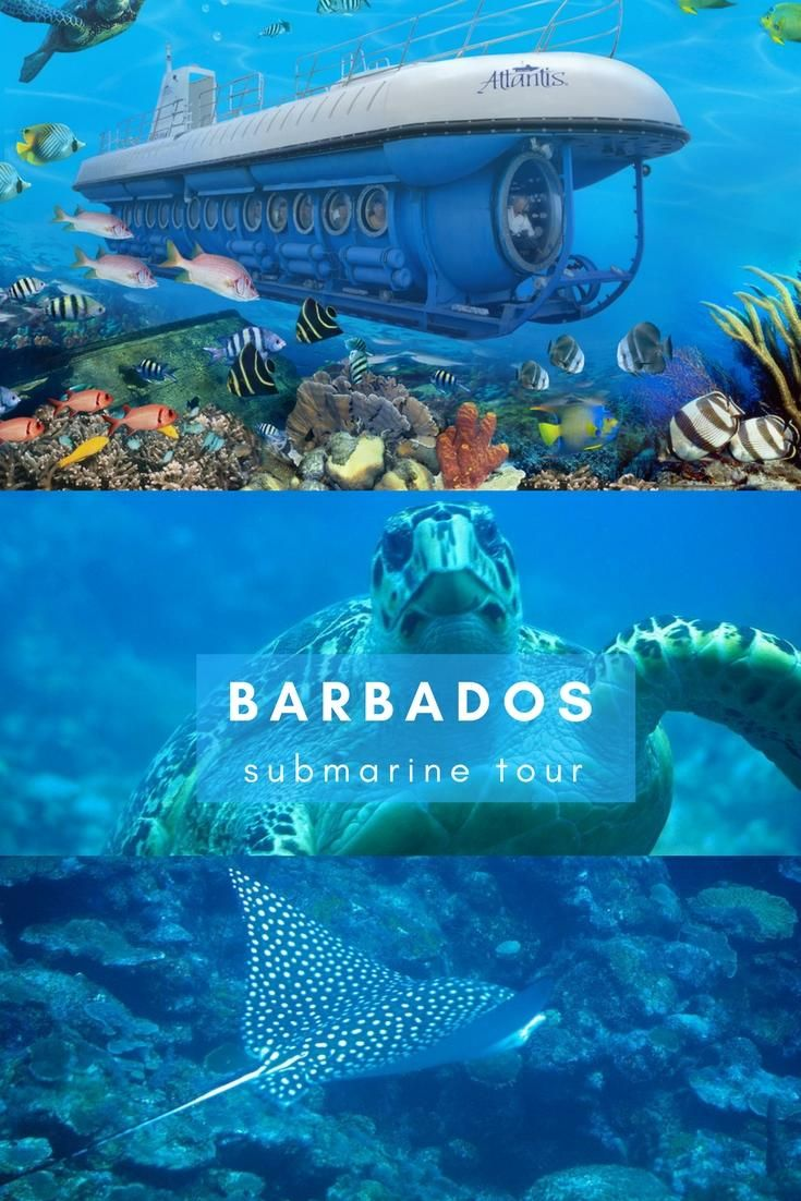 Experience the beauty of underwater Barbados from the comfort and safety of a submarine!