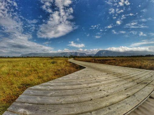 Pathway to adventure  • #tstMoments • #tstCanada w @GoPro @NLtweets @explorecanada • #ExploreCanada #ExploreNL #GoPro • #SocialTravel #Travel #Canada #Newfoundland #Grosmornerocks