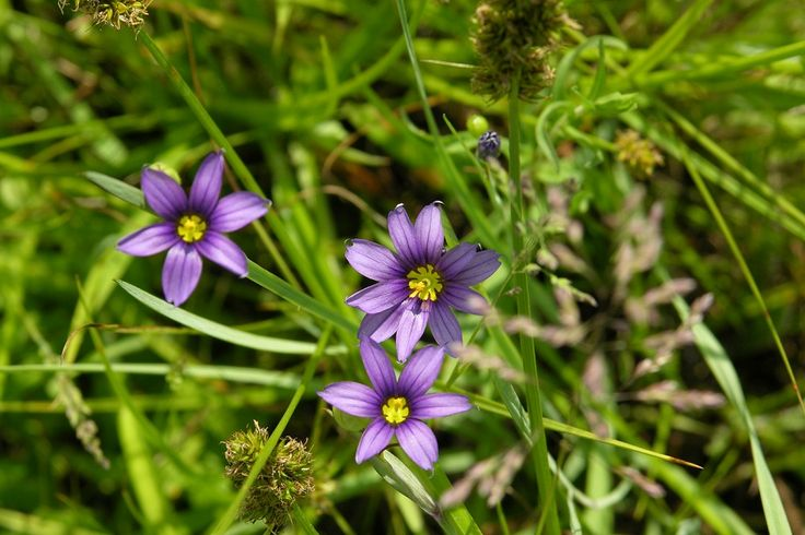252 best images about perennial plants on pinterest