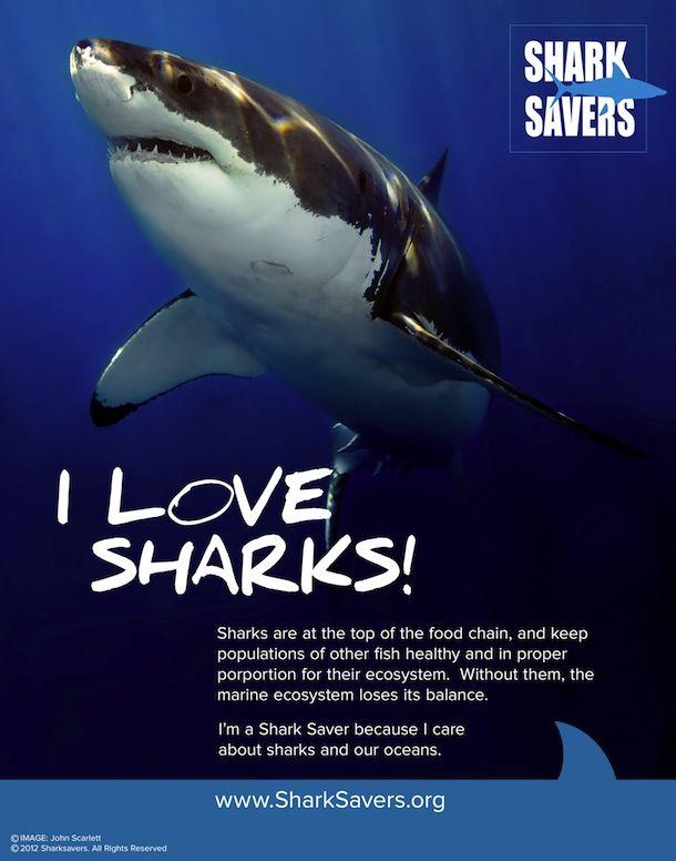 Save The Sharks Bracelet NOW AVAILABLE!! | The Official Pura Vida Bracelets Blog