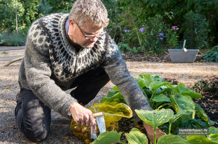 Here I'm planting more than 1000 bulbs – what a job …!