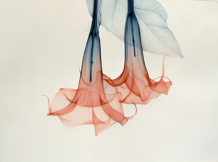 x-flower X-Ray art by Nick Veasey RADIOGRAPHX-RAY PHOTOGRAPHY / X-RAY ART More At FOSTERGINGER @ Pinterest