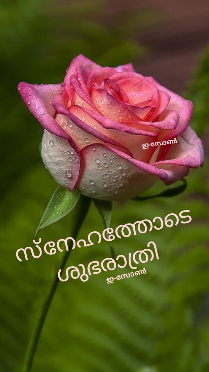 Pin By Eron On Good Night Malayalam Cute Good Morning Quotes Night Wishes Good Morning Quotes