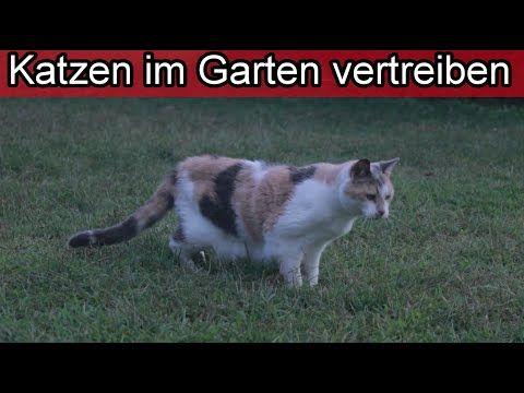 Katzen Mit Harmlosen Hausmitteln Aus Dem Garten Vertreiben Bzw Verscheuchen Fernhalten Youtube In 2020 Katzen Vertreiben Garten