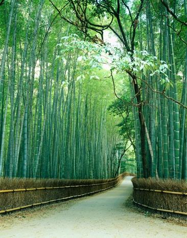 Bamboo Bamboo!