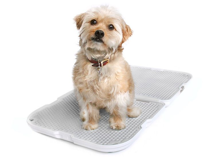 The dog potty is a more sustainable solution than weewee pads, and folds up for travel or apartment dwelling.
