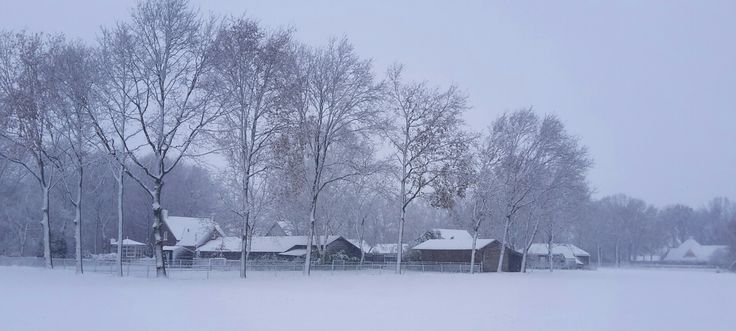 My winter pictures