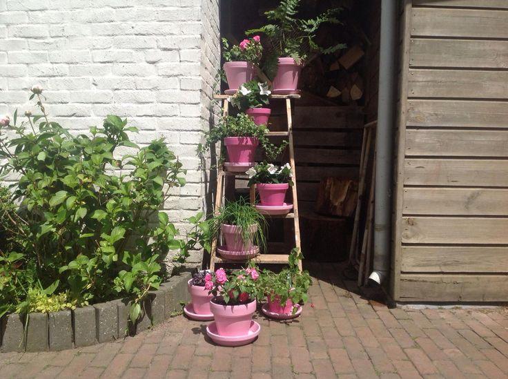 Een oude houten trap volgezet met verschillende geschilderde rose potten