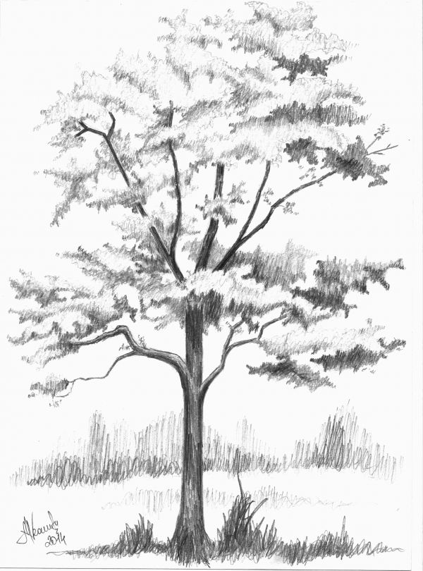 54 best How to Draw Realistic Trees, Plants Bushes and ...