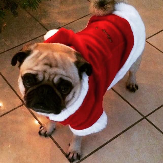 Puppia Santa Fleece Available At Www Ilovepugs Co Uk Post