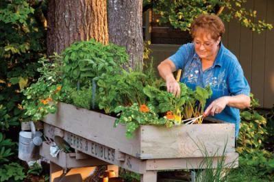 tabletop garden: Terrific Tabletop, Folk, Outdoor, Gardens, Earth News, Mother Earth, Tabletop Gardening, Gardening Plants Flowers Herbs