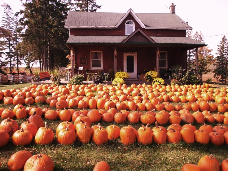 Pumpkin Patch -halloween tradition