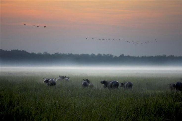 Bamurru Plains, near Kakadu National Park, Northern Territory, Australia | LoveBirds: Romantic Getaways for Two
