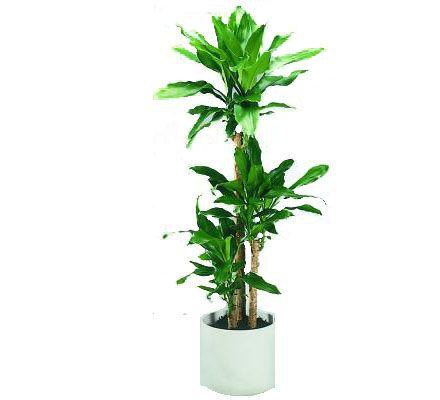 Best 20 plantes d polluantes ideas on pinterest - Depollution par les plantes ...