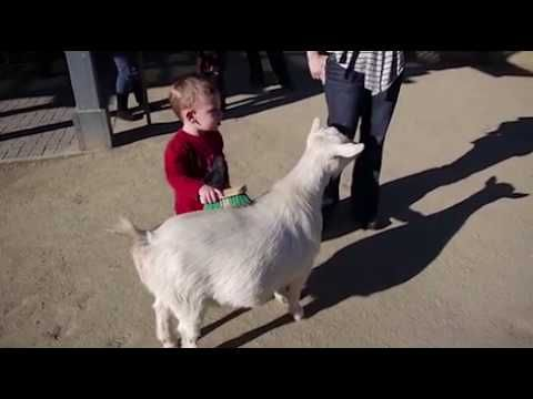 Goat's Fart Scares The Daylights Out Of Little Kid