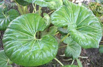 M s de 1000 im genes sobre plantas y flores en pinterest - Plantas que aguantan mucho sol y calor ...