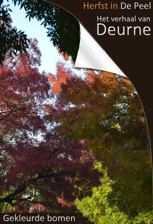 Gekleurde bomen  Herfst in De Peel. Banjeren door de gevallen bladeren, zoete geuren opsnuiven in het bos en genieten van prachtige kleuren.   - See more at: http://www.deurne-in-depeel.nl