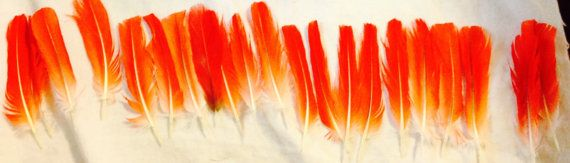 Congo African Grey Tail and Flight Feathers by FidosStore on Etsy
