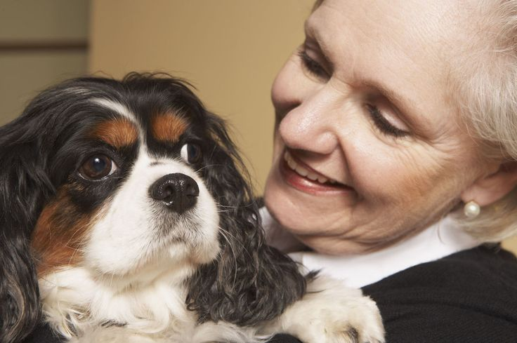 To Your Health: The benefits of pet therapy