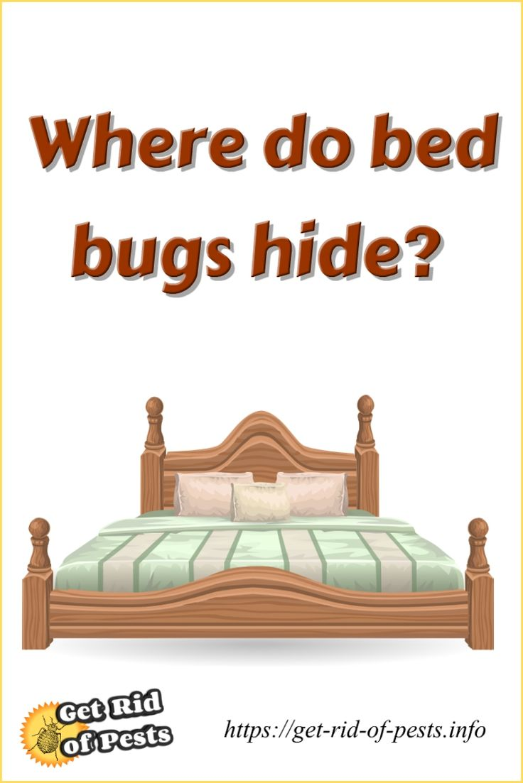 hide feces quarters nests board where cockroaches fleas head of and resting make large faqs bed when bug eggs behind can upper bugs pest do control