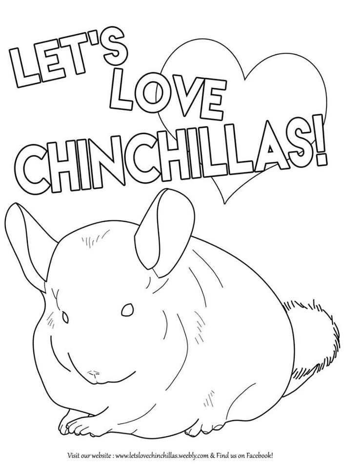59 best Chinchilla Art images on Pinterest Chinchillas Animals