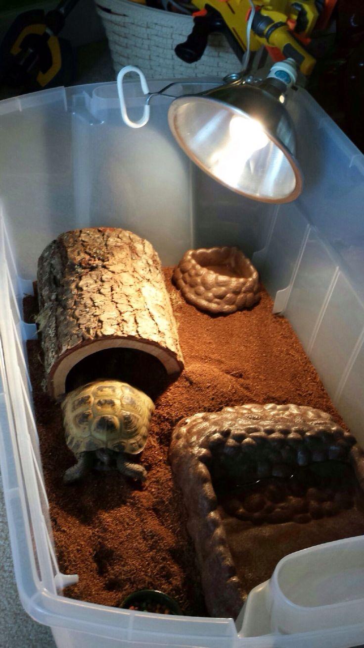 1000 ideas about tortoise enclosure on pinterest tortoise table - Russian Tortoise Indoor Enclosure Www Imgkid Com The