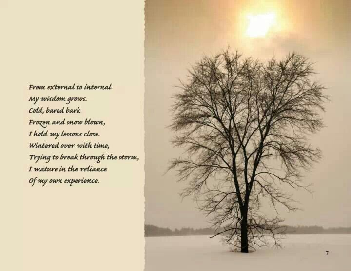 Tree wisdom | Words 2LivBy | Pinterest