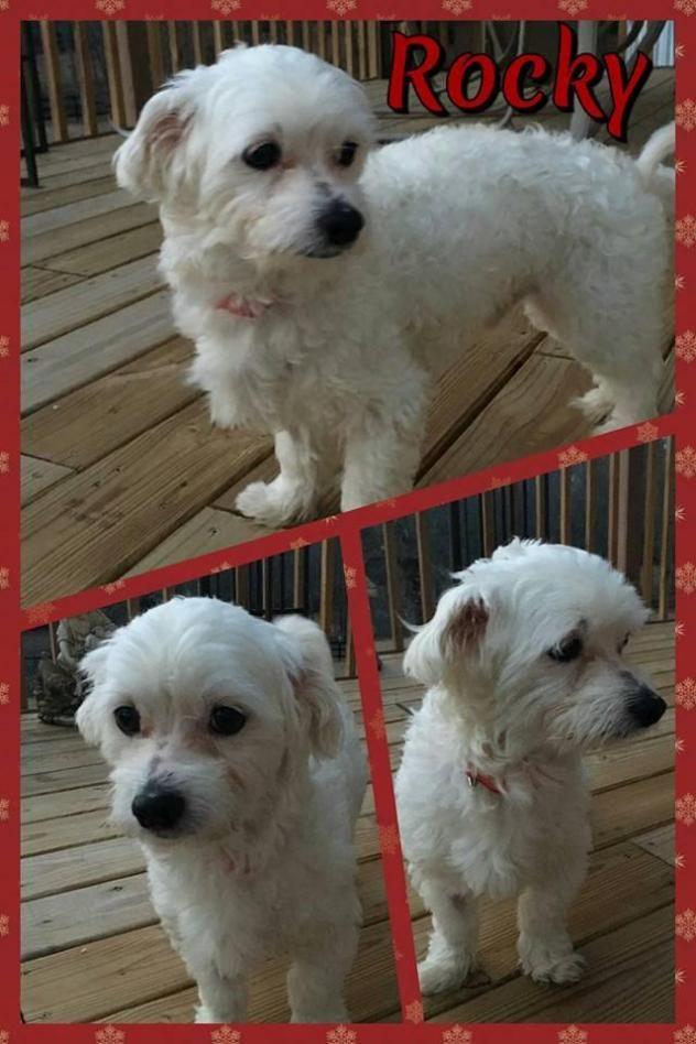 Puppy for Sale - Adoption, Rescue | Montana