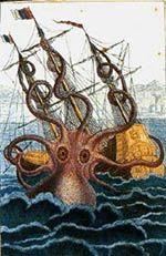 Mostri marini: il calamaro gigante
