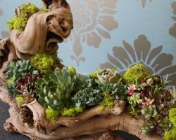 driftwood succulent