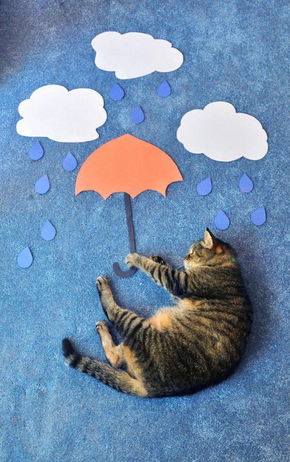 A cat's adventures, Theresa KnudsonCat Art, Cat Photography, Mary Poppins, Rainy Day, Pets Photos, Photos Shoots, Pets Photography, Baby Cat, Cat Photos