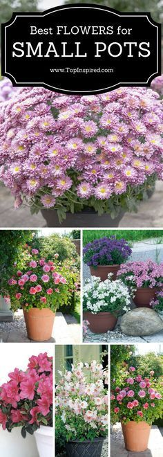 Best flowers for small pots