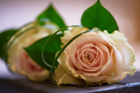 Buttonhole of Sweet Avalanche rose with twisted grass and foliage