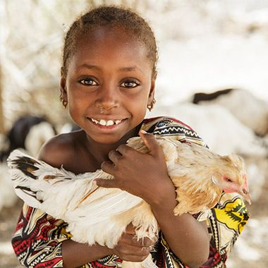Donate Birds To International Charities   Heifer International   Charity Ending Hunger And Poverty